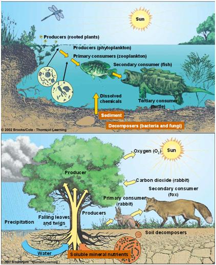 Bentuk Interaksi Dalam Ekosistem Ilmulingkungan Com Informasi