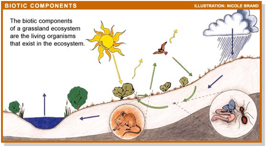 Komponen Biotik Dari Ekosistem Ilmulingkungan Com Informasi