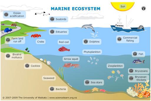 Ekosistem Air Laut Ilmulingkungan Com Informasi Mengenai Ilmu