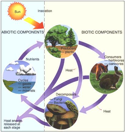 Komponen Abiotik Dalam Ekosistem Ilmulingkungan Com Informasi