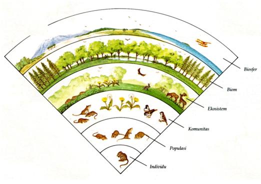 Satuan Organisasi Kehidupan Dalam Ekosistem Ilmulingkungan Com