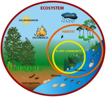 Apa Itu Ekosistem Pengertian Ekosistem Ekosistem